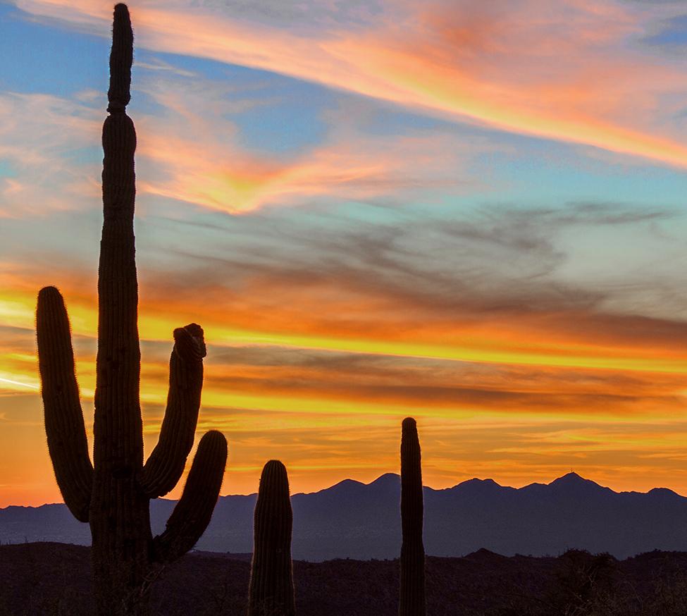 cactus in arizona desert